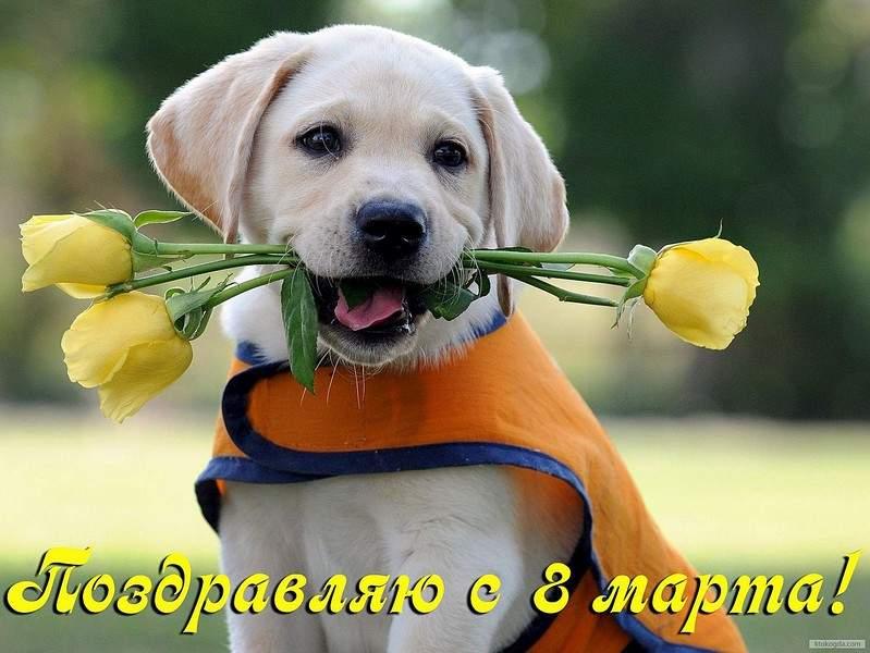 1250 X 938 251.2 Kb кинологическая федерация приволжского федерального округа. welcome!