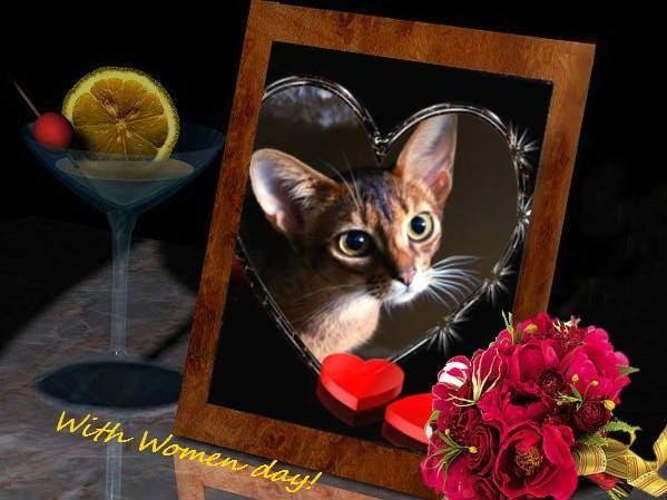 599 x 449 Веточка для Коржиков и абиссинских кошек