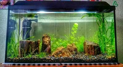 1920 X 1045 559.1 Kb Как запустить аквариум?