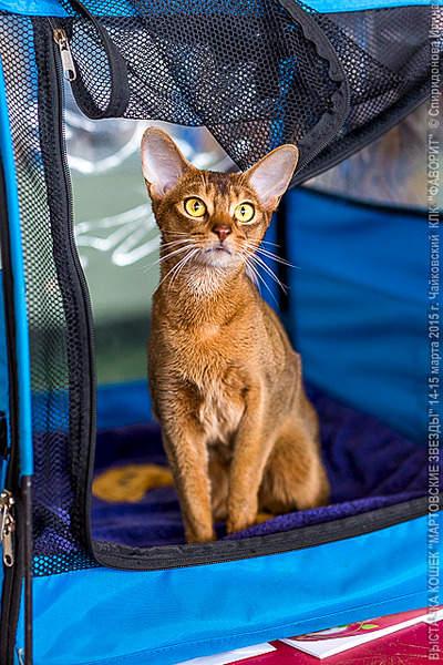 427 X 640 343.3 Kb 427 X 640 266.2 Kb 640 x 427 640 x 427 Веточка для Коржиков и абиссинских кошек