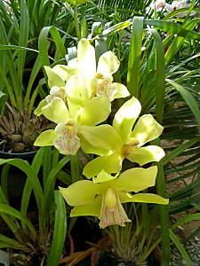 450 X 600 141.0 Kb 'Сад в стекле'. Композиции из растений.