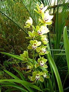450 X 600 179.4 Kb 450 X 600 164.0 Kb 450 X 600 141.0 Kb 'Сад в стекле'. Композиции из растений.