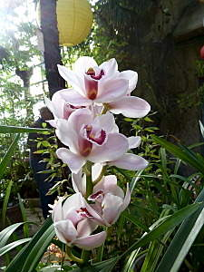 450 X 600 140.7 Kb 450 X 600 179.4 Kb 450 X 600 164.0 Kb 450 X 600 141.0 Kb 'Сад в стекле'. Композиции из растений.