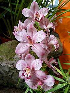 450 X 600 148.5 Kb 'Сад в стекле'. Композиции из растений.