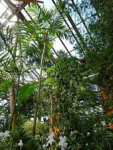 450 X 600 222.3 Kb 450 X 600 182.3 Kb 450 X 600 148.5 Kb 'Сад в стекле'. Композиции из растений.