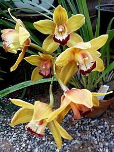 450 X 600 150.9 Kb 450 X 600 217.8 Kb 450 X 600 222.3 Kb 450 X 600 182.3 Kb 450 X 600 148.5 Kb 'Сад в стекле'. Композиции из растений.