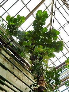 450 X 600 174.1 Kb 'Сад в стекле'. Композиции из растений.