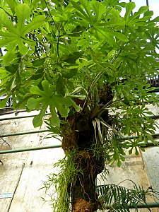 450 X 600 187.0 Kb 450 X 600 192.4 Kb 450 X 600 174.1 Kb 'Сад в стекле'. Композиции из растений.