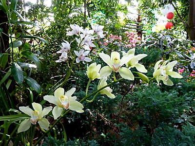 800 X 600 315.1 Kb 800 X 600 215.0 Kb 800 X 600 221.6 Kb 800 X 600 264.8 Kb 'Сад в стекле'. Композиции из растений.