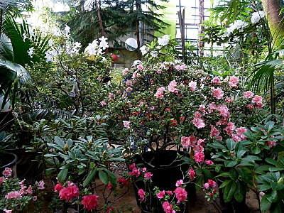 800 X 600 349.5 Kb 'Сад в стекле'. Композиции из растений.
