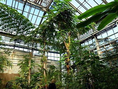 800 X 600 352.9 Kb 'Сад в стекле'. Композиции из растений.