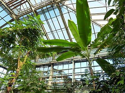 800 X 600 335.5 Kb 800 X 600 352.9 Kb 'Сад в стекле'. Композиции из растений.