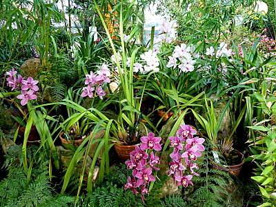 800 X 600 375.1 Kb 'Сад в стекле'. Композиции из растений.