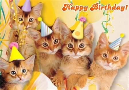 450 x 314 Питомник британских кошек Cherry Berry's. У нас родились котята!
