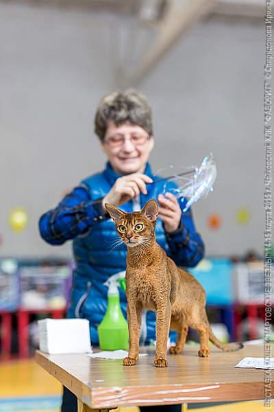 427 X 640 208.0 Kb Веточка для Коржиков и абиссинских кошек