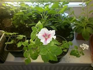 1280 X 960 161.3 Kb 1280 X 960 162.4 Kb цветы для вашего сада, кафе, придомовой территории. ВАКАНСИИ