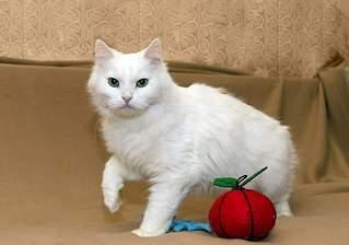 604 X 424 39.8 Kb Передержка для животных Пес Барбос отдает животных и пока не принимает кошек!