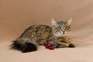 604 X 403 53.0 Kb 604 X 424 39.8 Kb Передержка для животных Пес Барбос отдает животных и пока не принимает кошек!