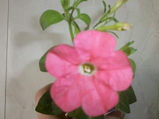 320 x 240 Цветы для вашего сада, кафе, придомовой территории. КУПИМ многолетники