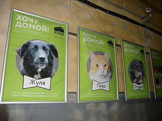 1920 X 1440 218.6 Kb Передержка для животных Пес Барбос отдает животных и пока не принимает кошек!