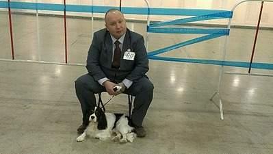 960 X 541 155.2 Kb Кавалер-кинг-чарльз-спаниель. Собака, создающая комфорт. Питомник Auroconcurr.