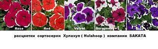 1024 X 317 65.0 Kb 1024 X 556 117.6 Kb 1024 X 446 101.1 Kb Продам рассаду сортовых петуний и других однолеток из профессиональных семян.