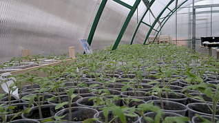 1920 X 1079 408.0 Kb Продам рассаду сортовых петуний и других однолеток из профессиональных семян.