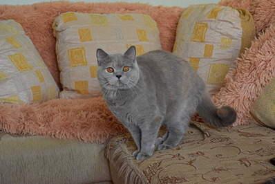 1920 X 1281 590.6 Kb Питомник британских кошек Cherry Berry's. У нас родились котята!