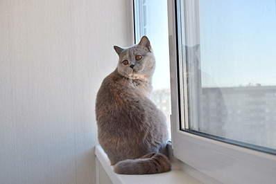 1920 X 1281 438.6 Kb 1920 X 1281 590.6 Kb Питомник британских кошек Cherry Berry's. У нас родились котята!