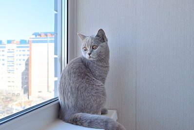 1920 X 1281 545.1 Kb Питомник британских кошек Cherry Berry's. У нас родились котята!