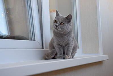 1920 X 1281 348.1 Kb 1920 X 1281 419.2 Kb 1920 X 1281 545.1 Kb Питомник британских кошек Cherry Berry's. У нас родились котята!