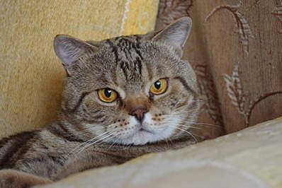 1920 X 1281 616.6 Kb Питомник британских кошек Cherry Berry's. У нас родились котята!