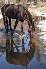 1920 X 2880 692.9 Kb Лошади и пони для фотосессий