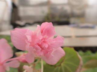 1152 X 864 443.2 Kb 1152 X 864 451.8 Kb Продажа редких растений из питомника 'Мой сад'