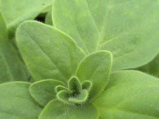 1152 X 864 475.4 Kb Продажа редких растений из питомника 'Мой сад'