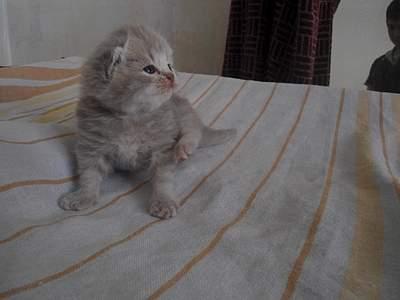 1024 X 768 322.9 Kb Питомник британских кошек Cherry Berry's.