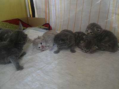 1024 X 768 367.3 Kb 1024 X 768 328.7 Kb 1024 X 768 322.9 Kb Питомник британских кошек Cherry Berry's.