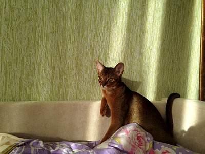 1920 X 1440 913.0 Kb Веточка для Коржиков и абиссинских кошек