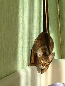 1920 X 2560 779.1 Kb 1920 X 1440 913.0 Kb Веточка для Коржиков и абиссинских кошек