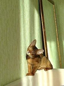 1920 X 2560 832.4 Kb 1920 X 2560 779.1 Kb 1920 X 1440 913.0 Kb Веточка для Коржиков и абиссинских кошек