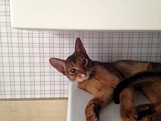 1920 X 1440 596.3 Kb 1920 X 2560 603.8 Kb 1920 X 1440 715.2 Kb Веточка для Коржиков и абиссинских кошек