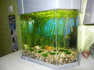 320 x 240 Как запустить аквариум?