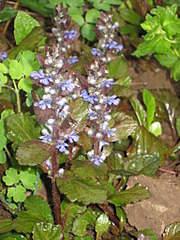 1536 X 2048 317.4 Kb Цветы для вашего сада, кафе, придомовой территории. КУПИМ многолетники