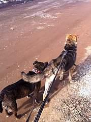 716 X 960 214.1 Kb 716 X 960 229.8 Kb Боря, сбитая собака, Авангардная, скорее всего не будет видеть
