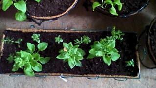 1872 X 1056 295.8 Kb Цветы для вашего сада, кафе, придомовой территории. КУПИМ многолетники