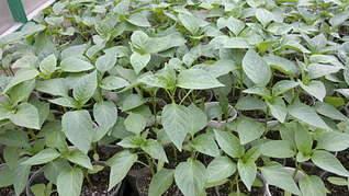 1920 X 1079 231.9 Kb 1920 X 1079 342.0 Kb 1920 X 1079 281.1 Kb Продам рассаду сортовых петуний и других однолеток из профессиональных семян.