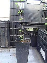 864 X 1152 418.6 Kb Продажа редких растений из питомника 'Мой сад'