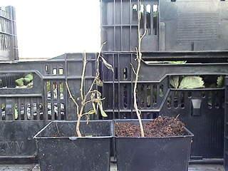 1152 X 864 394.6 Kb 864 X 1152 390.8 Kb 864 X 1152 418.6 Kb Продажа редких растений из питомника 'Мой сад'