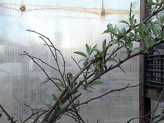 1152 X 864 399.9 Kb Продажа редких растений из питомника 'Мой сад'