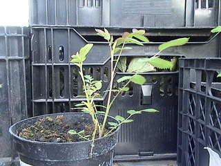 1152 X 864 437.6 Kb Продажа редких растений из питомника 'Мой сад'